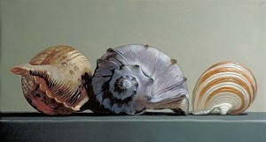 3 shells painting by Peter Woodward