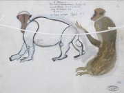 Standing-macaque-gouache-by-HENRI-SAMOUILOV7